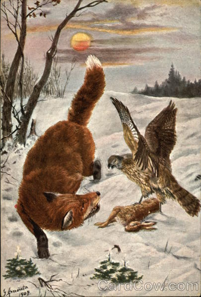 Red Fox and Hawk fighting over Rabbit in the Snow Multiple Animals