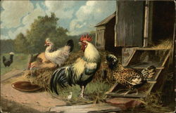 Flock of Chickens and Roosters