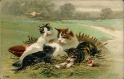 A Cat With Her Three Kittens In A Field