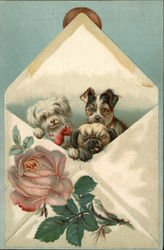 Envelope holding three dogs, with a pink rose