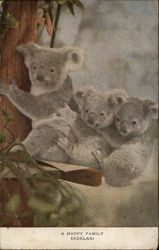 """A Happy Family"" - Three Koalas"