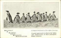 A Penguin With a Descriptive Dressing