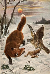 Red Fox and Hawk fighting over Rabbit in the Snow