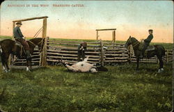 Ranching in the West, Branding Cattle