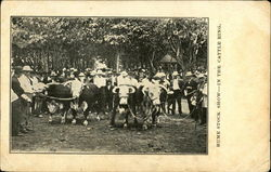 Hume Stock Show - In The Cattle Ring