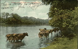 Bathing Scene at Silver Lake - Cattle