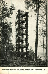 Living Tower made from Growing Redwood Trees