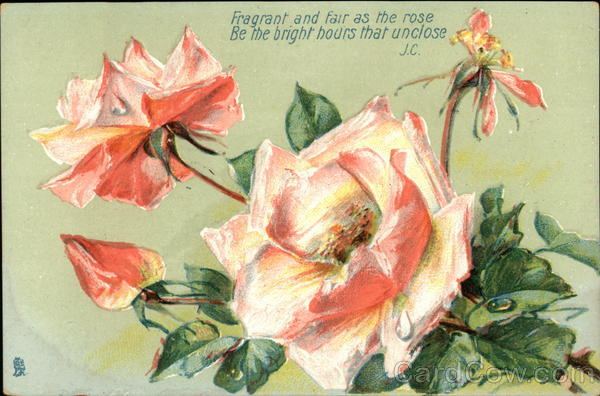 Pink Roses with Poem Flowers