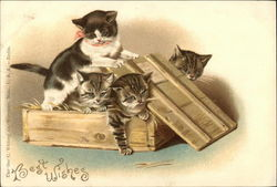 Best Wishes with a box full of Kittens