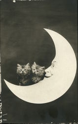Portrait of Kittens on a Paper moon