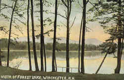 Vista Of Forest Lake