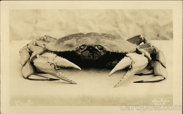 Crab, claws facing front