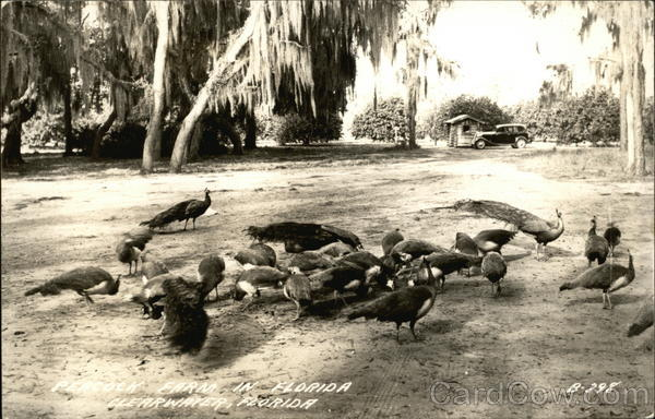 Peacock Farm Clearwater Florida
