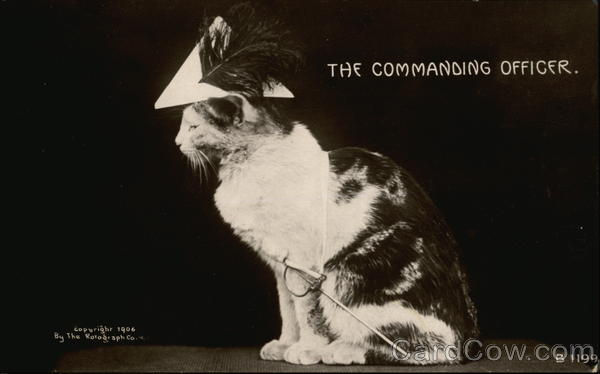 The Commanding Officer Cats
