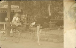 Cawston Ostrich Farm - Girl in Cart Postcard