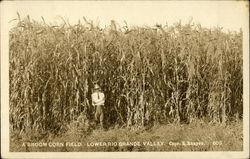 A Broom Corn Field, Lower Rio Grande Valley