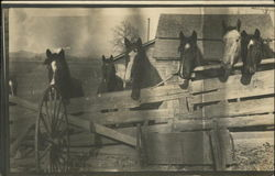 Six Horses Looking Over Fence