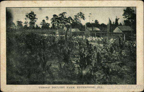 Throop Poultry Farm Enterprise Florida