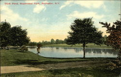 Duck Pond at Maplewood Park