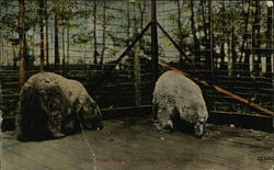 The Polar Bears, Waldridge Park