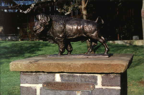 Bronze Buffalo, The Scout Association, GIlwell Park England