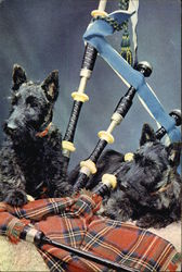 Scotties and Bagpipes
