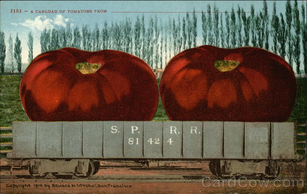 A Carload of Tomatoes From ---- Exaggeration