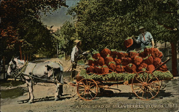A Fine Load of Strawberries, Florida Exaggeration