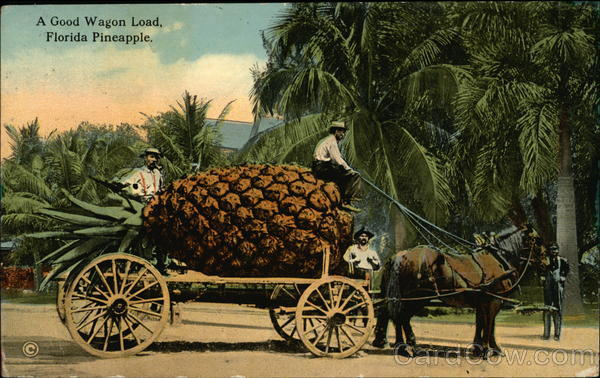 A Good Wagon Load, Flordia Pineapple Exaggeration