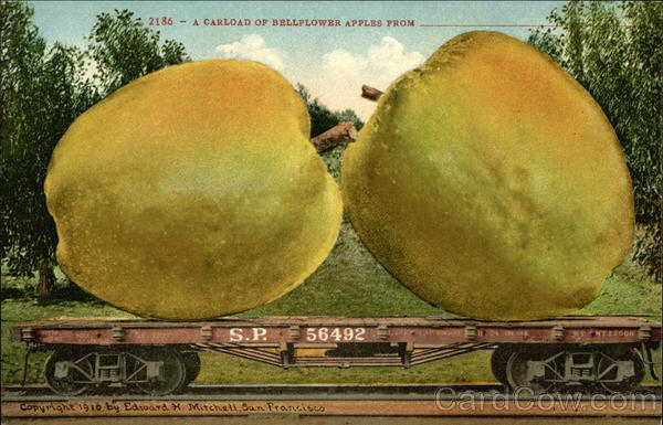 A Carload of Bellflower Apples From Exaggeration