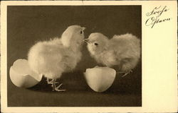 Two Easter Chicks