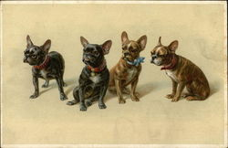 Four Bulldogs or Terriers