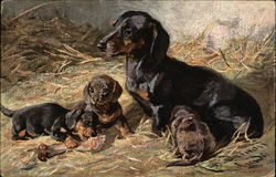 Dog and Three Puppies