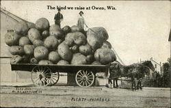 The Kind we Raise at Owen, Wis., Plenty Potatoes