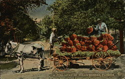 A Fine Load of Strawberries, Florida