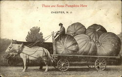 There are Some Pumpkins Here, Chester, N.J
