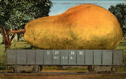 A Carload - a Mammoth Pear From