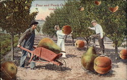 Pear and Peach Orchard, Idaho