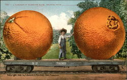 A Carload of Mammoth Navel Oranges From ----
