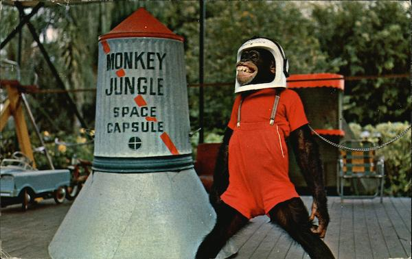 10-9-8-7-6-5-4-3-2-1 Blast-Off Time at Monkey Jungle