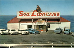 Sea Lion Caves - Year Round Home of the Wild Sea Lions