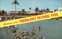 Greetings from Everglades National Park