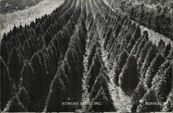 Corliss Bros. Inc. Nursery