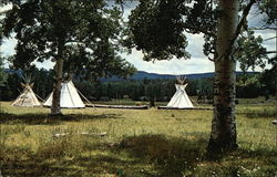 Apache Springs Camp