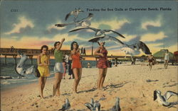 Women Feeding the Sea Gulls on the Beach