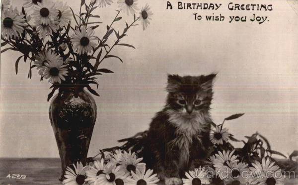 A Birthday Greeting Cats