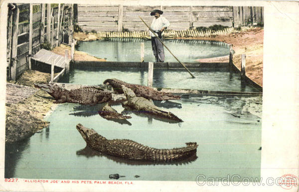 Alligator Joe And His Pets Palm Beach Florida