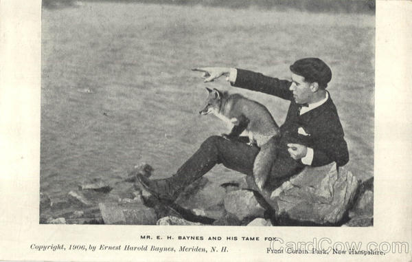 Mr. E. H. Baynes And His Tame Fox, Corbin Park Postcard
