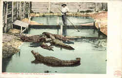 Alligator Joe And His Pets