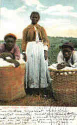Cotton Picker's Postcard